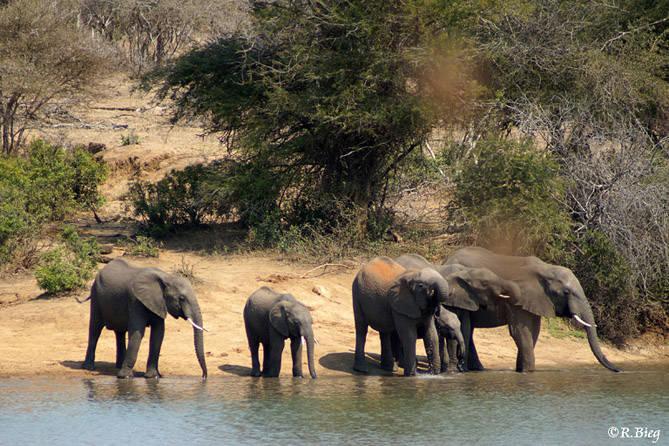 Elefanten kommen zum Trinken nahe ans Hotel