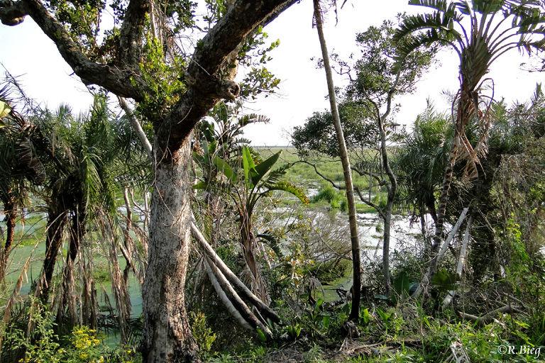 Der Grassland Loop führt entlang einer Sumpflandschaft