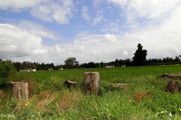 Farmgebiet von Addo