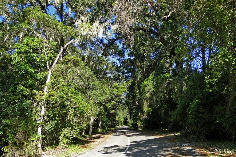Der Park schützt den letzten Küstenregenwald