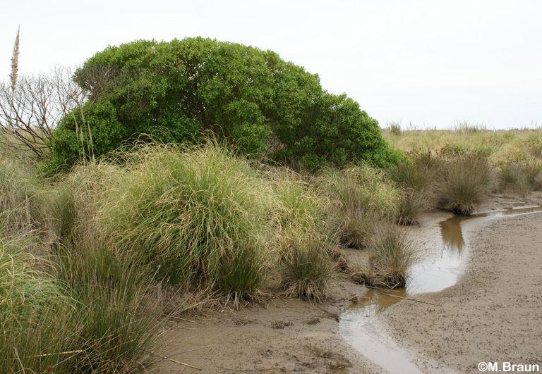 Kleine Wasserläufe im Hinterland des Naturschutzgebietes