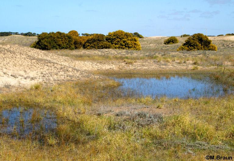 Tümpel in den Dünen bei Punta Medanos