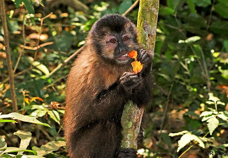 In Iguazú sind sie nicht sehr scheu