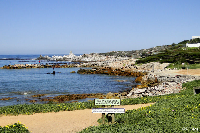 Das Naturschutzgebiet in Bettys Bay - Stony Point