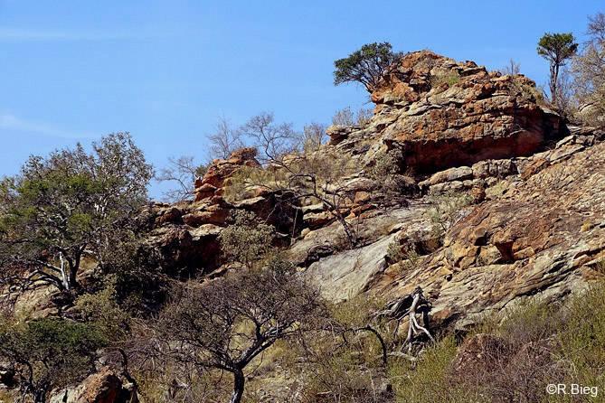 Die Landschaft in Mapungubwe