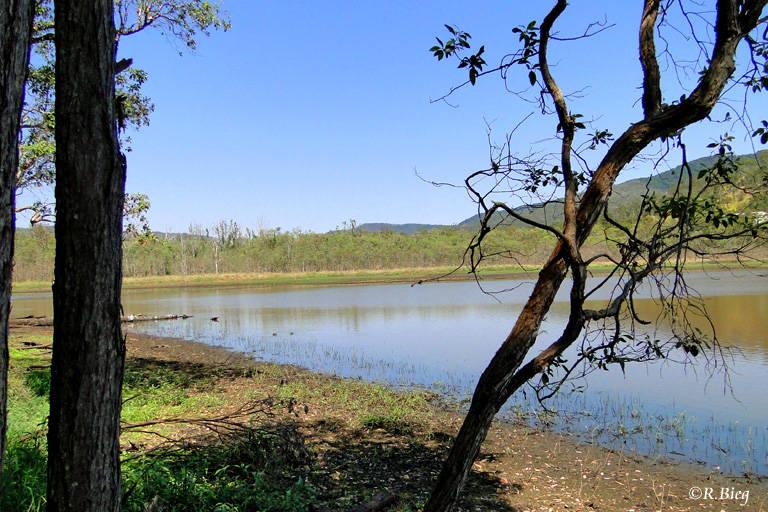 In den Hasties Swamps nahe Atherton
