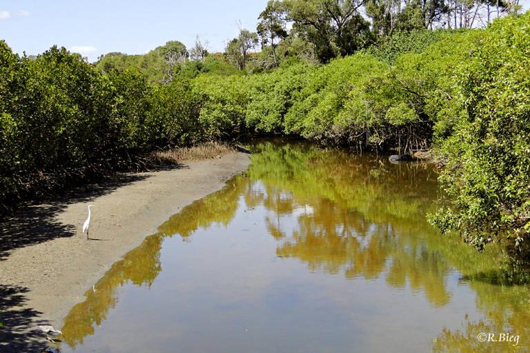 Im Ort gibt es eine kleine Mangrove