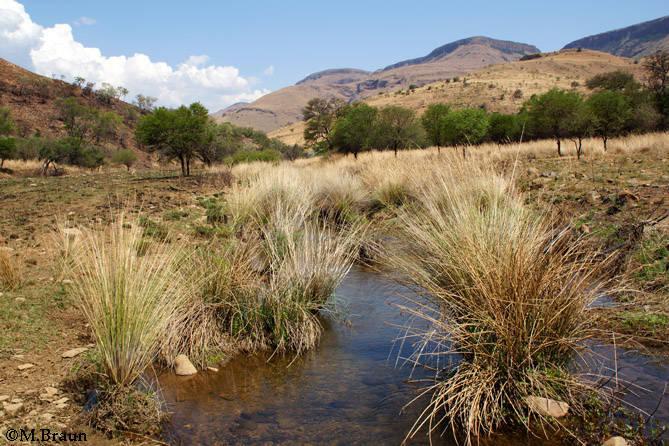Landschaft im Nature Reserve