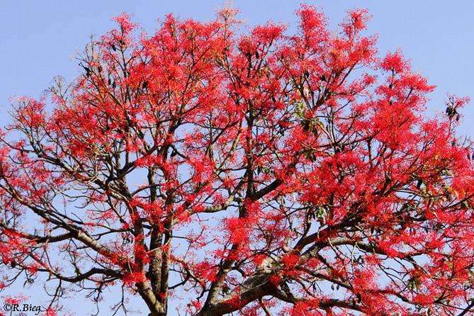 Blütenpracht im Hotelgarten