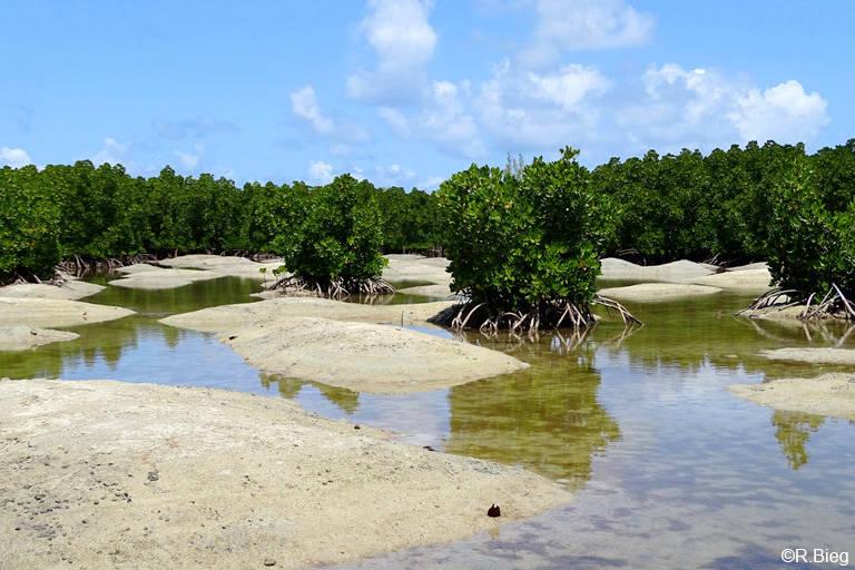 Am Pointe Jerome - hier gibt es noch eine kleines Mangrovengebiet