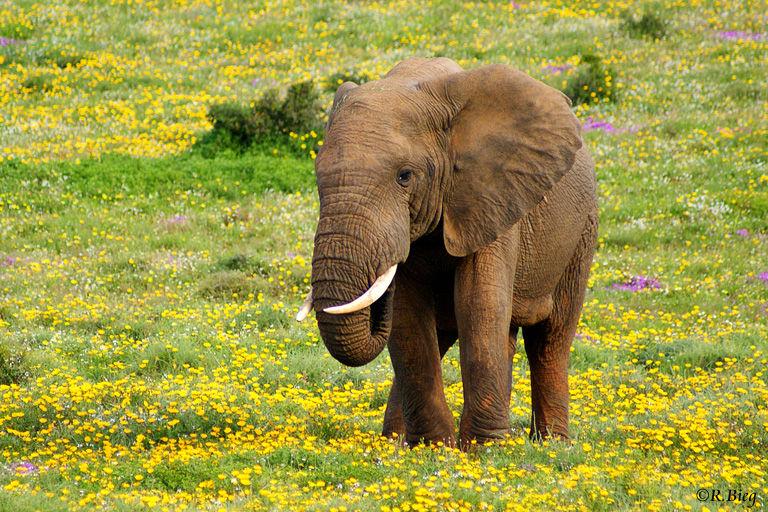Im Park leben ca. 500 Elefanten
