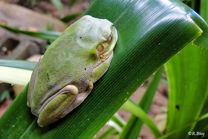 Frosch im Garten des Gästehauses