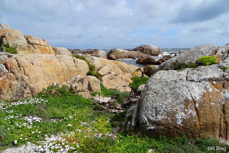 Felsenküste in Cape Columbine