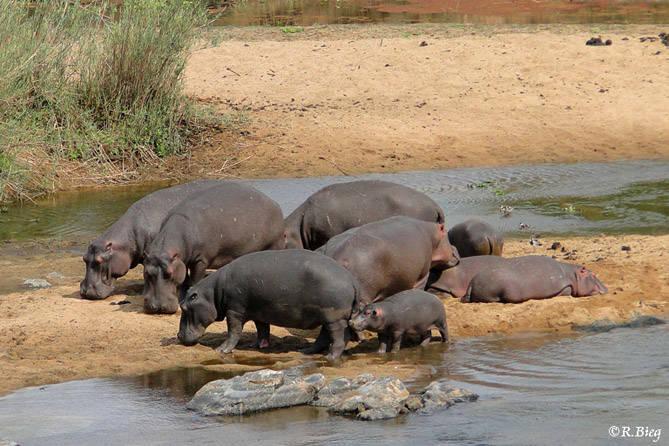 Eine Hippofamilie taucht ebenfalls beim Frühstück auf