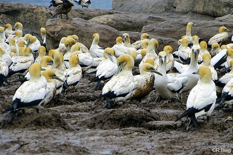 Eine der wenigen Kolonien, die man vom Festland aus besichtigen kann