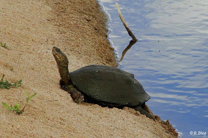 Schildkröte unbest. am Hotel