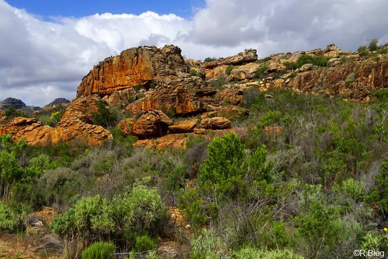 Felsenlandschaft der Cederberge