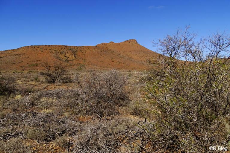 Im Karoo Nationalpark