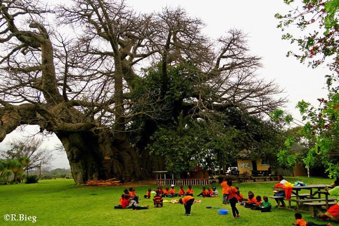 Der Sunland Baobab