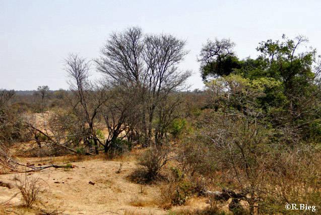Die Vegetation in Tshukudu