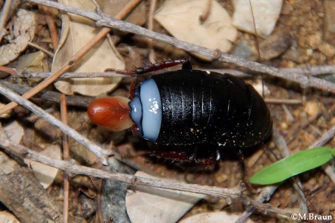 Nachts zeigten sich viele Käfer - unbest.