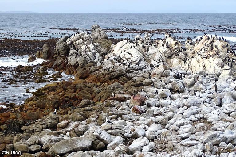 Blick auf das Reservat Stony Point - hier lebt die Pinguinkolonie