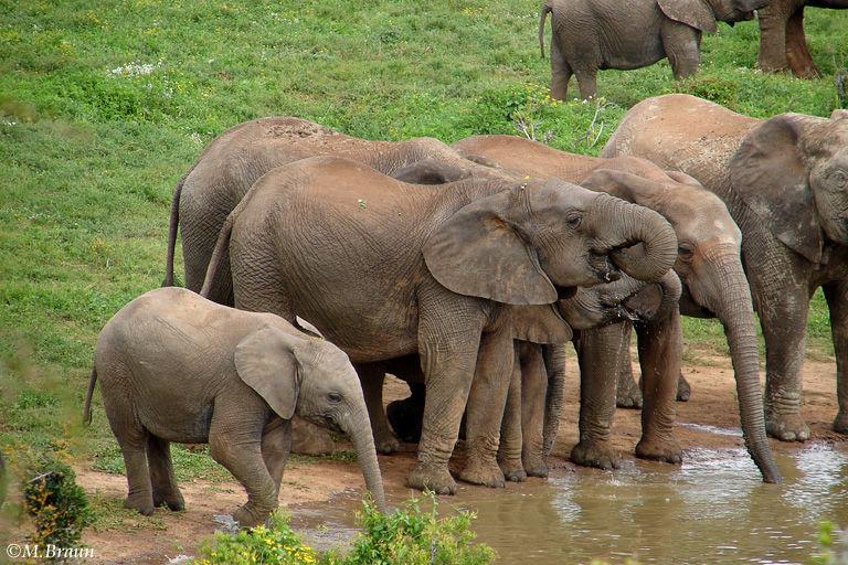 Hier sahen wir sehr viele Elefanten