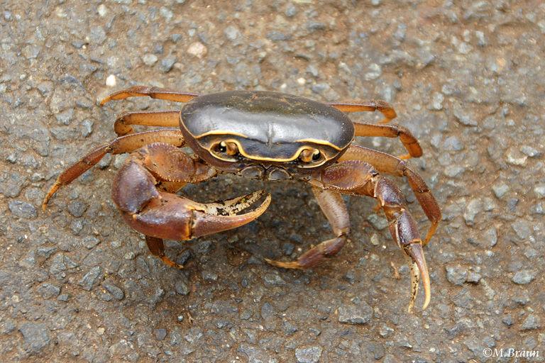 Diese Krabbe hatte sich im Hotel verirrt