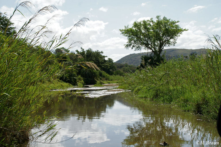Am Nzimane-Fluss