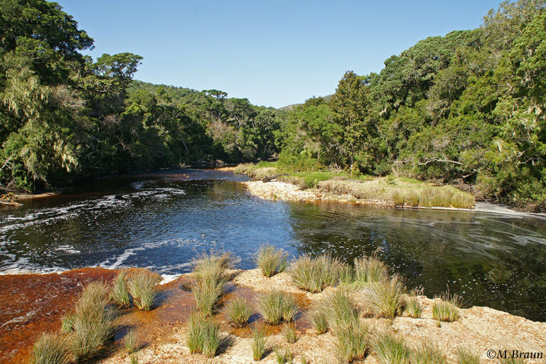 Am Groot River in Natures Valley