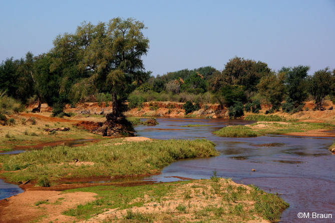 Am Limpopo