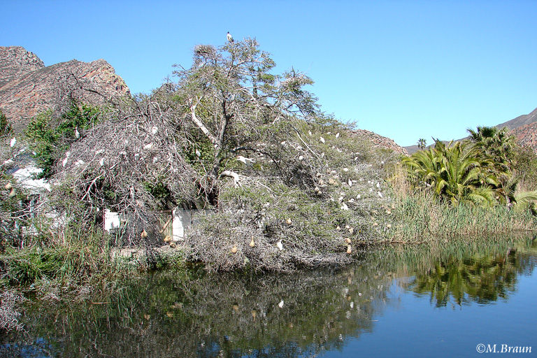 An einem kleinen See brütet eine Reiherkolonie
