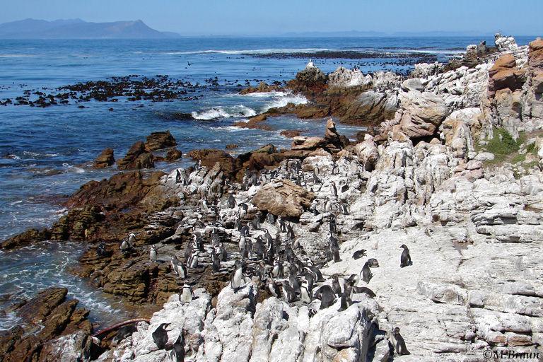 In dieser Felsenlandschaft lebt eine große Pinguinkolonie