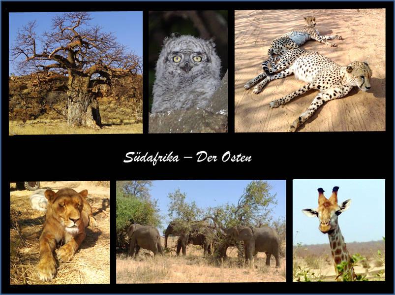 Fotozusammenstellung Südafrika