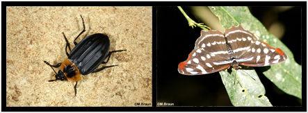 Fotos Vögel und andere Wirbeltiere