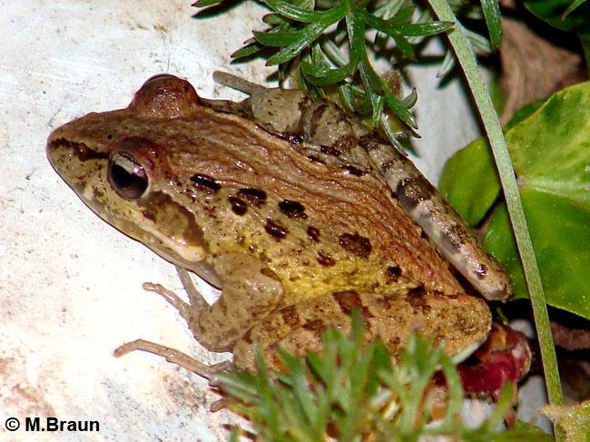 Frosch im Hotelgarten