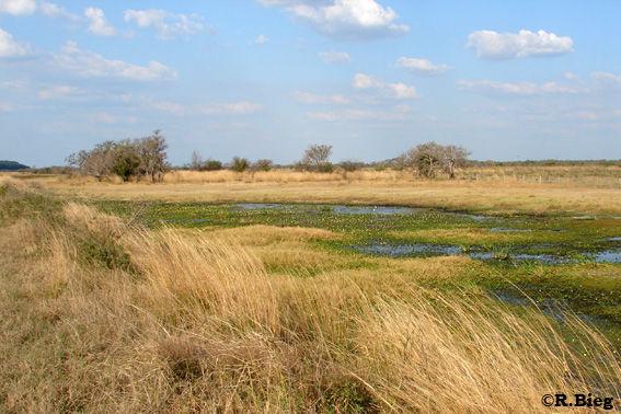 Ibera Landschaft