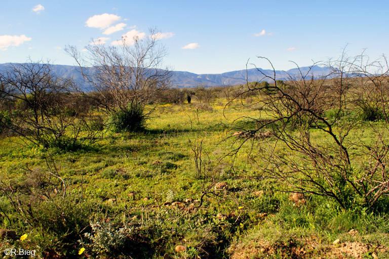 Landschaft im Bontebok
