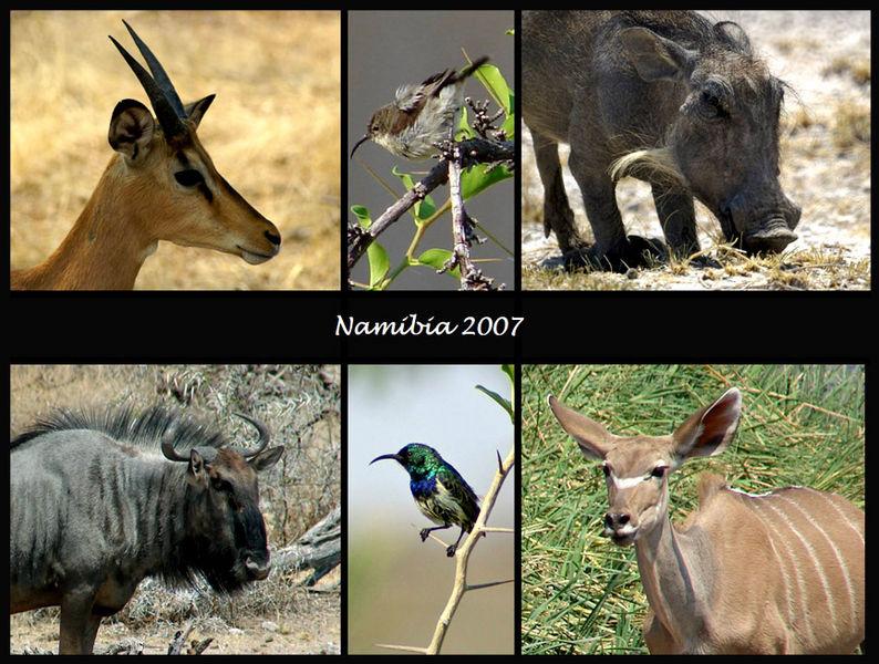 Tierfotos Namibia