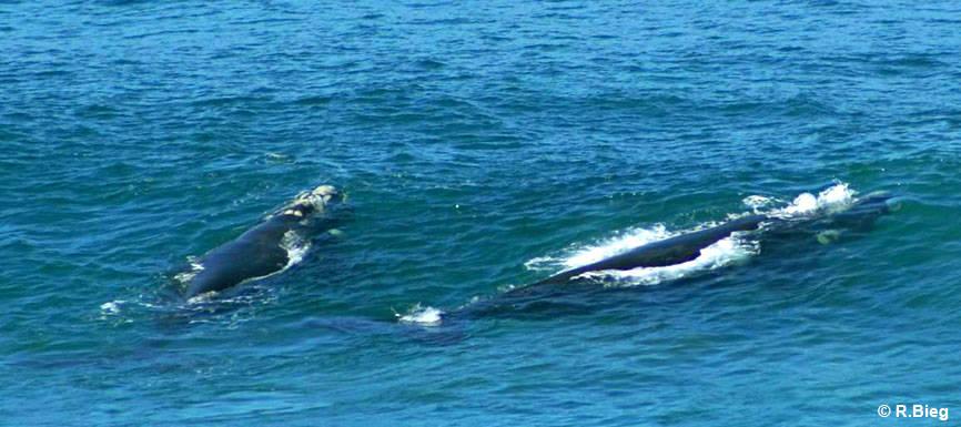 Endlich Wale - kurz vor dem Ort Wilderness