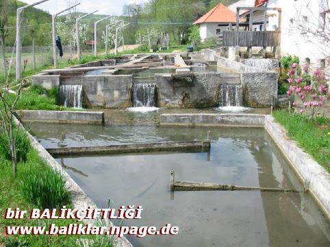 BİR BALIKÇİFTLİĞİNDEN GÖRÜNÜM, www.baliklar.npage.de  www.balikciftligi.npage.de ve www.balikciftligi.tr.gg Siteleri adına BİLGEADAM  ADNAN ÖZTÜRK Sunar.