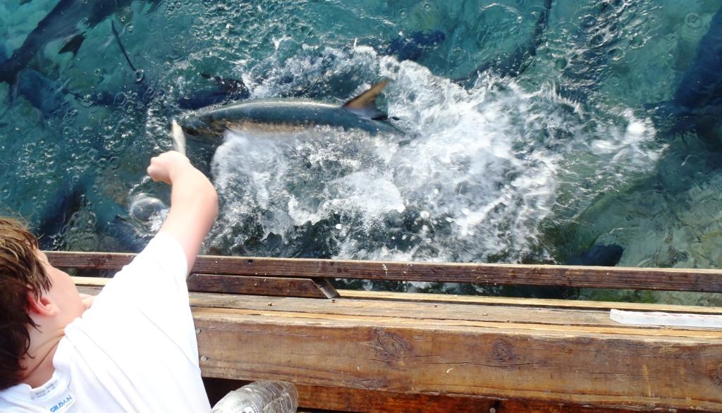 fische wann füttern im märz