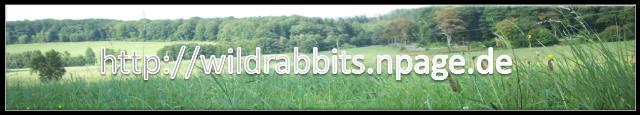 wildrabbits