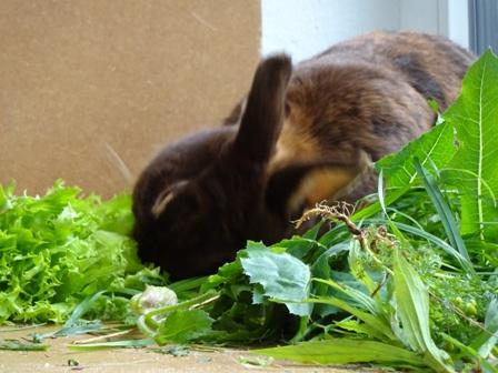 welche pflanzen fressen kaninchen nicht