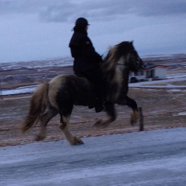 ein tolles Pferd...