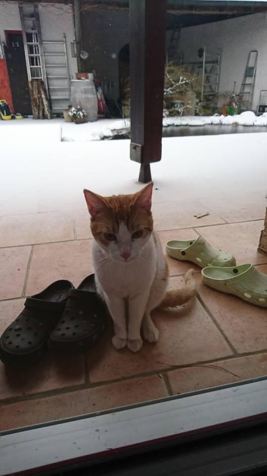 weißer kater gefunden