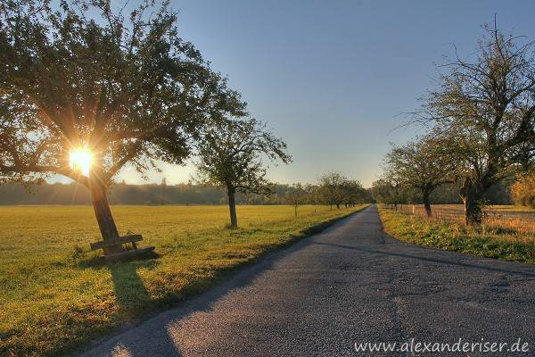 Kühkopf Sonnenaufgang in der Obstbaumallee