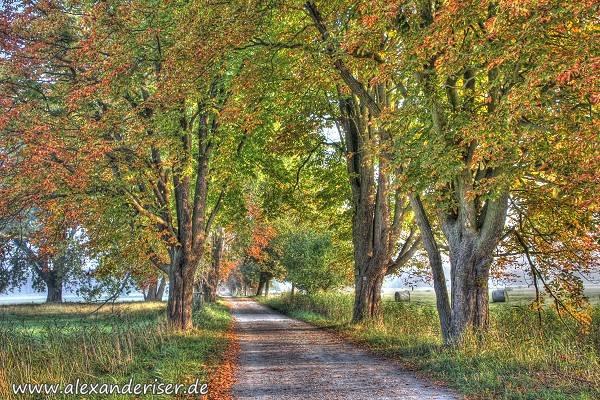 Mönchbruchallee im Herbst