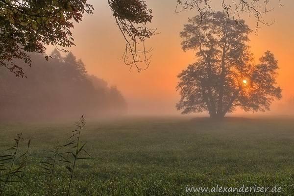 Sonnenaufgang in Mönchbruch