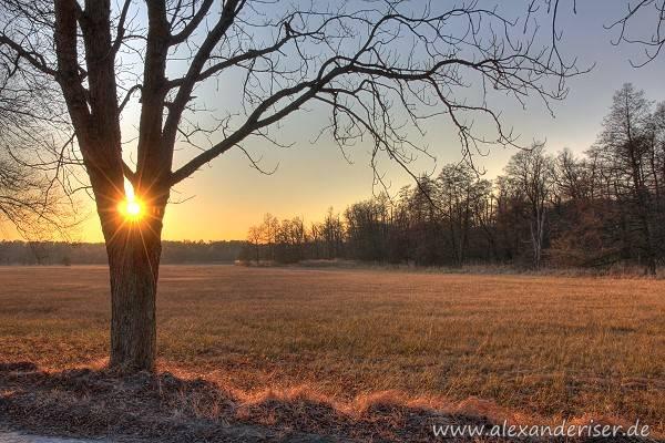 Mönchbruch Sonnenaufgang